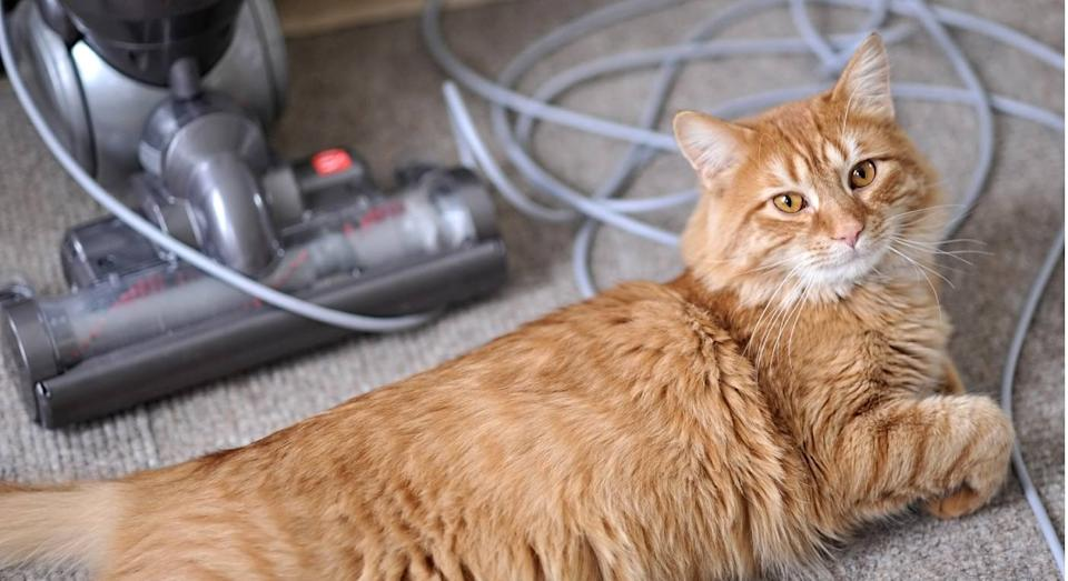 This top-rated hoover is a must-buy for all pet owners. (Getty Images)