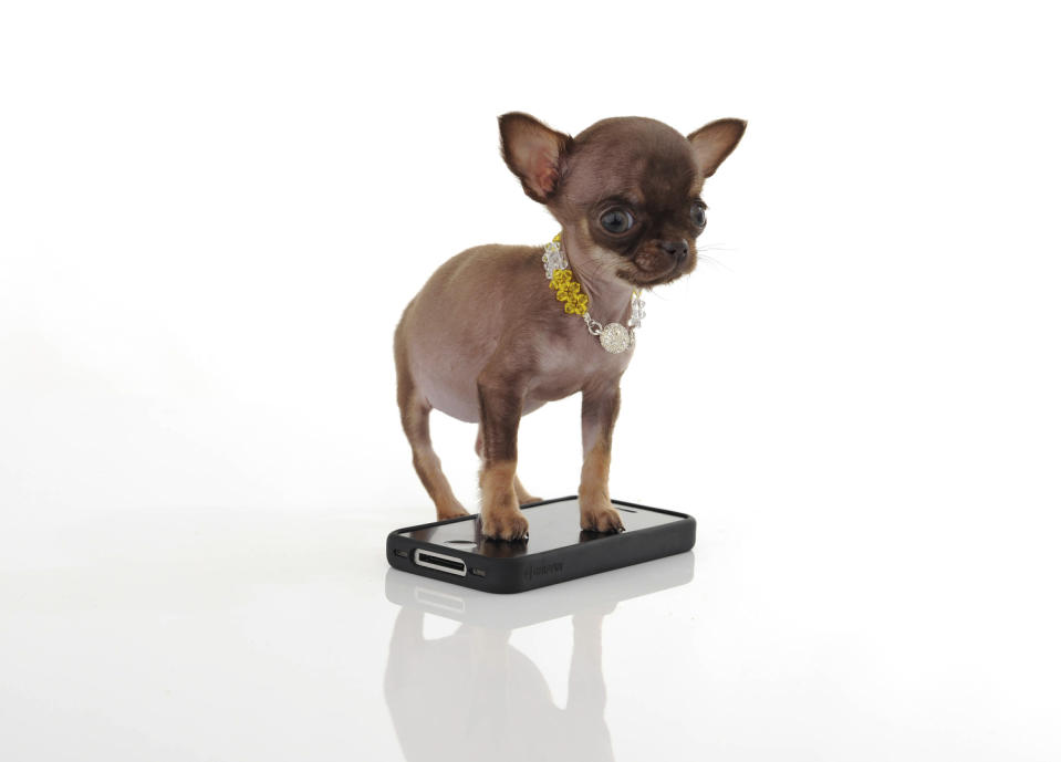 Milly stands atop an iPhone.