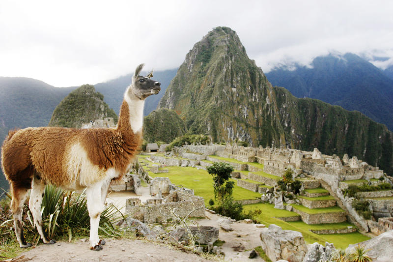 A llama stands in front of the Inca citadel of Machu Picchu in Cuzco May 29, 2009. Picture taken May 29, 2009. REUTERS/Enrique Castro-Mendivil (PERU SOCIETY TRAVEL ANIMALS)