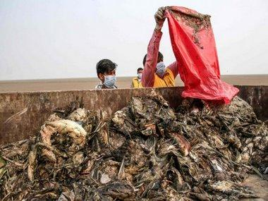 Number of dead migratory birds rises to 17,000 in Rajasthan's Sambhar lake within a week; deaths due to avian botulism