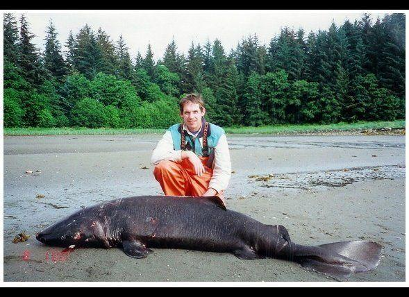 This 2000 image shows biologist Bruce Wright in salt waters in southeast Alaska with a small Pacific sleeper shark that was caught on a research cruise. He believes much bigger versions of this shark group could be the true identity of Scotland's Loch Ness Monster and Alaska's Lake Iliamna creature known as Illie.