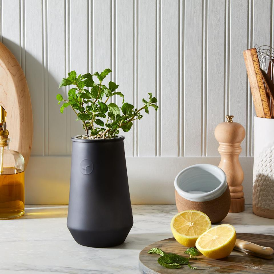 """<h3>Modern Sprout Smoked Glass Garden Grow Kit</h3><br>What do sourdough, Dalgona coffee, and cloud bread all have in common? In addition to being delicious, they all blew TF up during quarantine — and gardening is poised to join the elite crew of at-home pastimes. Get your Virgo friends started with this hydroponic (grown in water, not soil) plant kit.<br><br><strong>Modern Sprout</strong> Smoked Glass Garden Grow Kit, $, available at <a href=""""https://go.skimresources.com/?id=30283X879131&url=https%3A%2F%2Ffood52.com%2Fshop%2Fproducts%2F5485-smoked-glass-garden-grow-kit"""" rel=""""nofollow noopener"""" target=""""_blank"""" data-ylk=""""slk:Food52"""" class=""""link rapid-noclick-resp"""">Food52</a>"""