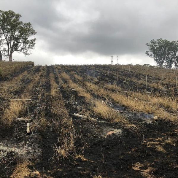 A burnt field is seen at a vineyard in Adelaide Hills