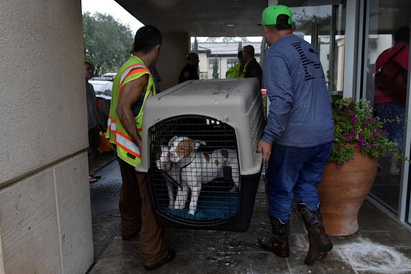 Rescued dogs are taken to an evacuation center in Bellaire, a city within the Houston metropolitan area. (Nick Oxford / Reuters)
