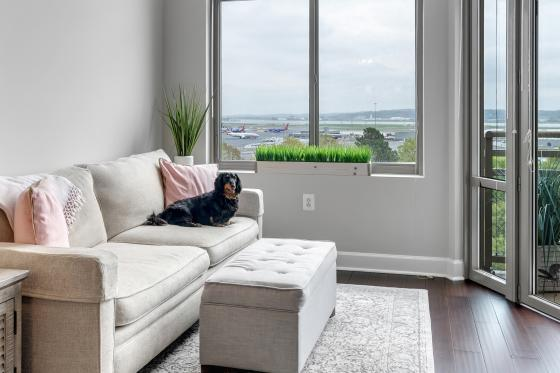Freddie the dog sitting on a living room couch of a modern apartment
