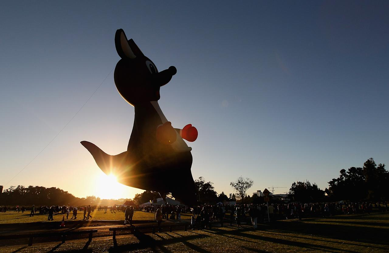 The boxing kangaroo balloon is inflated at Innes Common Park on March 29, 2012 in Hamilton, New Zealand. Each Autumn over 30 hot air balloons grace the sky as part of the Balloons Over Waikato Festival.  (Photo by Sandra Mu/Getty Images)