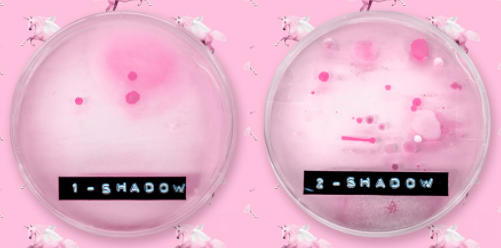Microbial growth of eyeshadow that is cleaned after every use (left), vs. that of eyeshadow that is rarely cleaned (right)