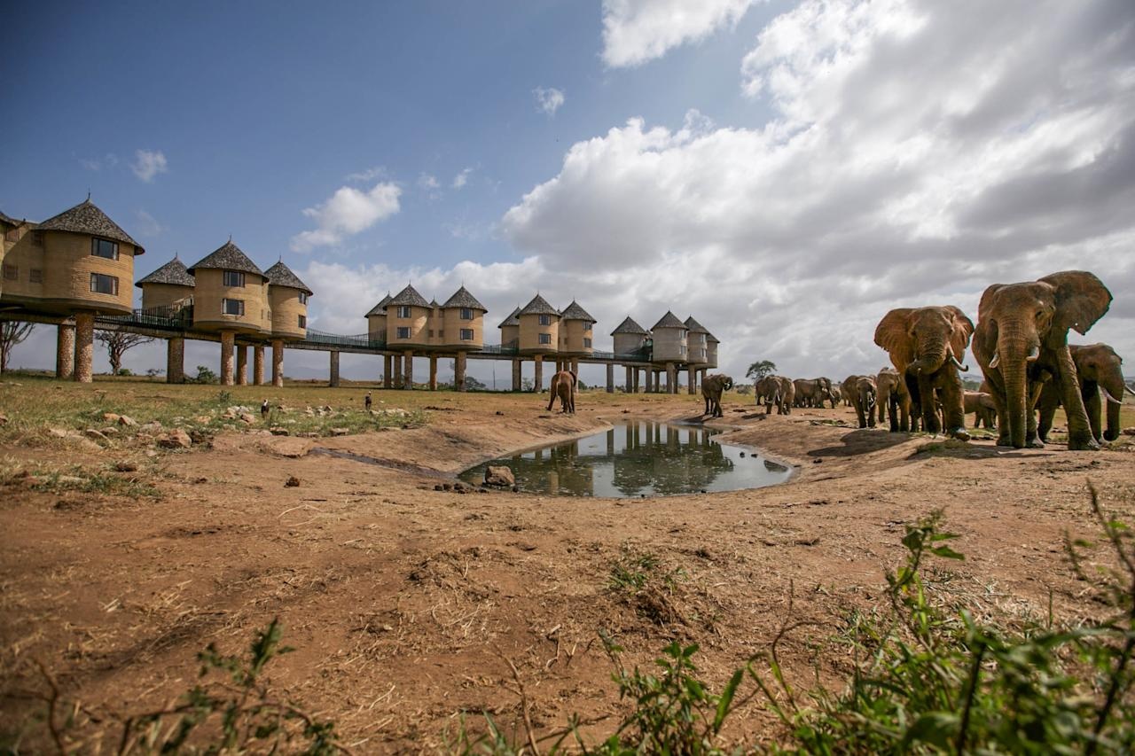 """The <a rel=""""nofollow"""" href=""""https://www.sarovahotels.com/saltlick-tsavo/"""">stilted architecture of the hotel</a> is unique on its own, but the views from up there are what truly make it stand out. It was built above a watering hole, so all types of animals are constantly coming by the property to quench their thirst."""