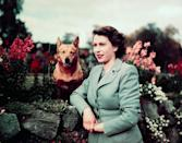 <p>The queen stands in a garden at Balmoral Castle with one of her Corgis.</p>