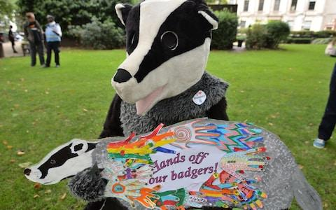 Anti-cull groups have campaigned to try to stop the Government cull - Credit: John Stillwell/PA
