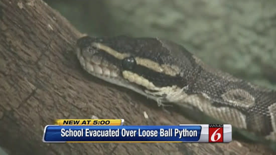 Elementary school is evacuated after python escapes
