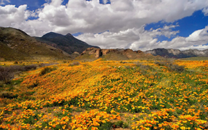 Castner Range is home to 7,081 acres of West Texas beauty and has historical significance that dates back thousands of years. For many, it's best known for its  display of Mexican Gold Poppies. (Photo Credit: Mark Clune)