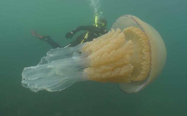 Lizzie Daly with the giant jellyfish - Dan Abbott