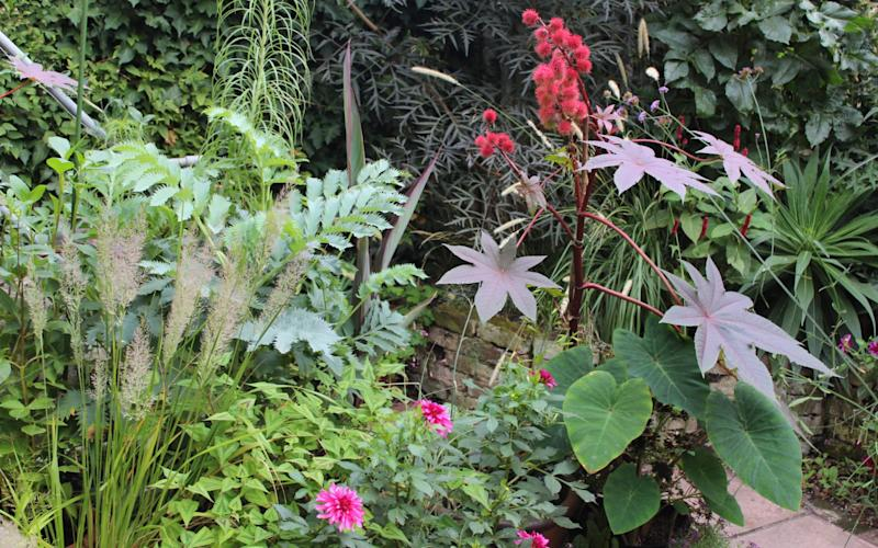 Blue-green leaves of Melianthus contrast with deep red Ricinus in Jack Wallington's garden - Jack Wallington