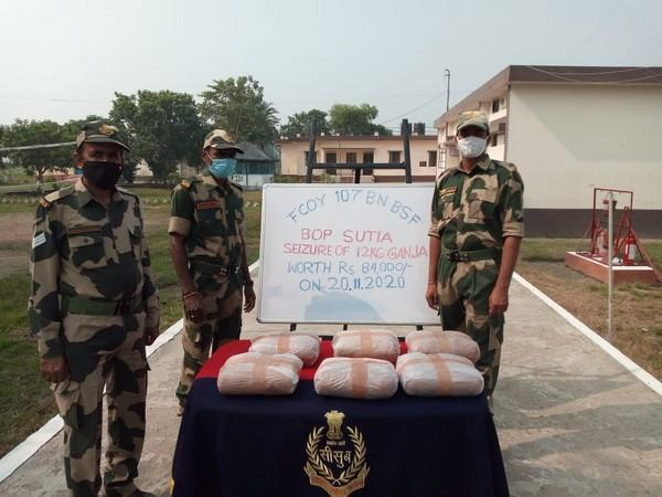 BSF apprehended 1 Phensedyl smuggler, seized 978 bootles of Phensedyl and 12 kgs of Ganja on South Bengal Frontier (Photo ANI)