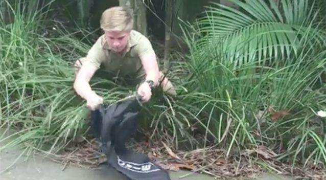 Robert Irwin carefully removed the snake. Source: Facebook