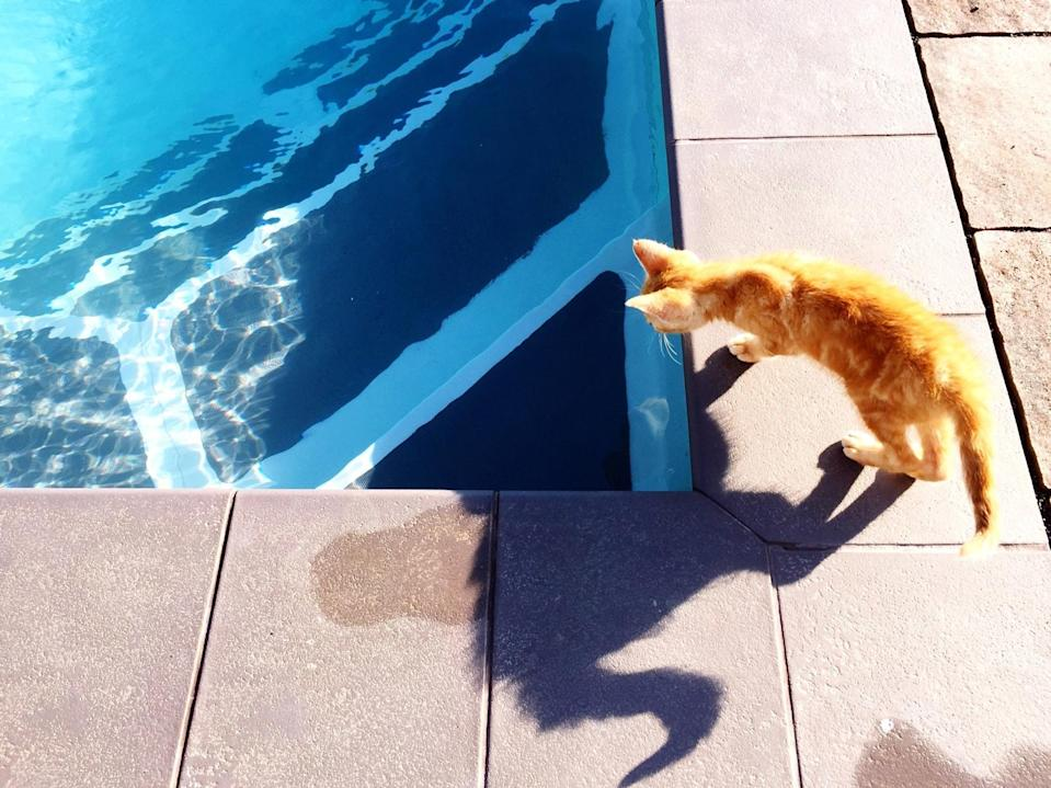 """<p>Most cats avoid water. The first time that you try to <a href=""""https://www.marthastewart.com/2226792/how-bathe-your-cat"""" rel=""""nofollow noopener"""" target=""""_blank"""" data-ylk=""""slk:give one of them a bath"""" class=""""link rapid-noclick-resp"""">give one of them a bath</a> in the tub involves a lot of screeching and flailing claws. If you, too, <a href=""""https://www.marthastewart.com/2221413/signs-youre-a-cat-lady"""" rel=""""nofollow noopener"""" target=""""_blank"""" data-ylk=""""slk:live with cats"""" class=""""link rapid-noclick-resp"""">live with cats</a> and struggle to give yours an occasional bath, then you may be surprised to learn that there are some breeds that enjoy water. """"Cats groom themselves with <a href=""""https://www.marthastewart.com/7753678/why-do-cats-lick-you"""" rel=""""nofollow noopener"""" target=""""_blank"""" data-ylk=""""slk:constant regular licking"""" class=""""link rapid-noclick-resp"""">constant regular licking</a>, which stops oils from <a href=""""https://www.marthastewart.com/7570504/teach-your-pet-to-like-baths"""" rel=""""nofollow noopener"""" target=""""_blank"""" data-ylk=""""slk:building up on their fur"""" class=""""link rapid-noclick-resp"""">building up on their fur</a>,"""" explains Lambert Wang, co-founder of <a href=""""https://www.catperson.com/"""" rel=""""nofollow noopener"""" target=""""_blank"""" data-ylk=""""slk:Cat Person"""" class=""""link rapid-noclick-resp"""">Cat Person</a> and the foster parent of over a dozen cats throughout years of volunteer work with the <a href=""""https://www.nycacc.org/"""" rel=""""nofollow noopener"""" target=""""_blank"""" data-ylk=""""slk:Animal Care Centers of New York City"""" class=""""link rapid-noclick-resp"""">Animal Care Centers of New York City</a>. """"As a result, their coats are not very waterproof so they can get very cold and feel heavy when wet, which is why many of them don't like it!""""</p> <p>This harkens to their origins: In nature you'll see many of the wild cats, like lions and tigers, drinking and swimming in the water. Primal cats experience water on a daily basis—<a href=""""https://www.marthastewart.com/7536628/pet-dehydrati"""