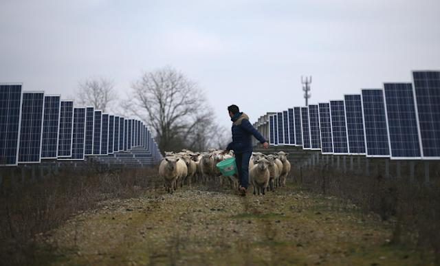 A sheep breeder is seen with his sheep at a photovoltaic power plant in Allonnes near Le Mans, France January 8, 2018. REUTERS/Stephane Mahe