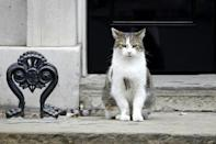 Larry the Cat arrived at 10 Downing Street on February 15, 2011, at the age of four