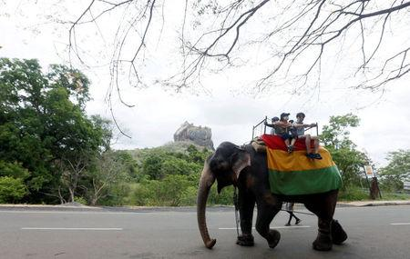 FILE PHOTO: Tourists travel by elephant in Dambulla
