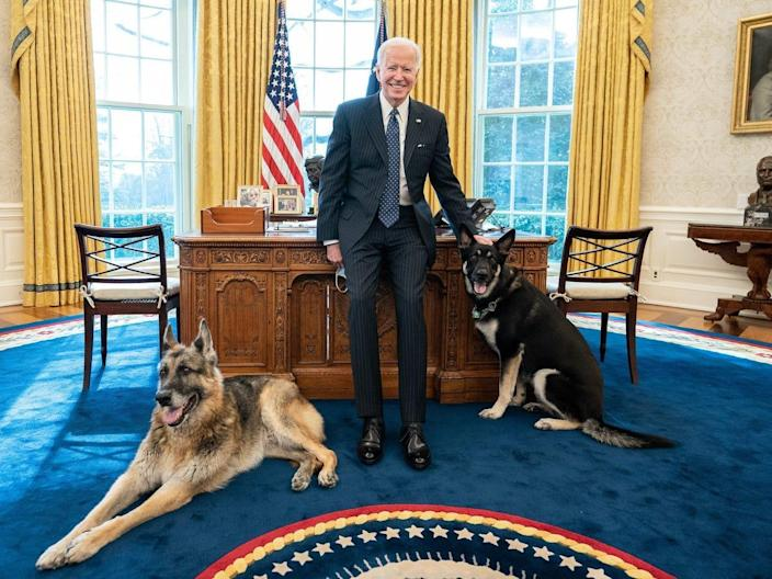 Joe Biden in Oval Office with Champ and Major