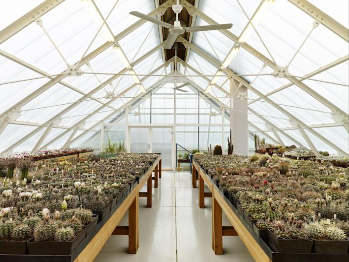 Inside the home's greenhouse, several cacti grow all year long to help regulate the temperatures in the house below.