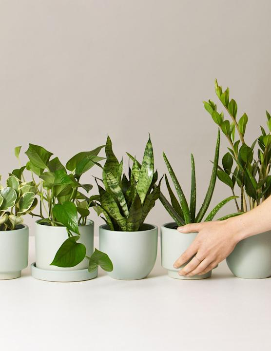 The Sill Monthly Plant Subscription