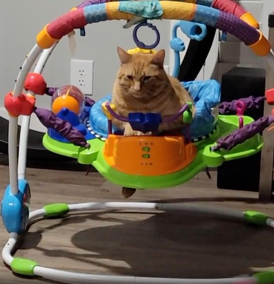 Cat Goes Viral in Baby Bouncer