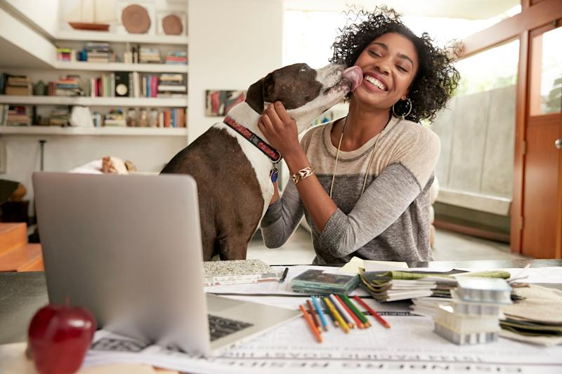 Dog licking face of female interior designer working at home office desk