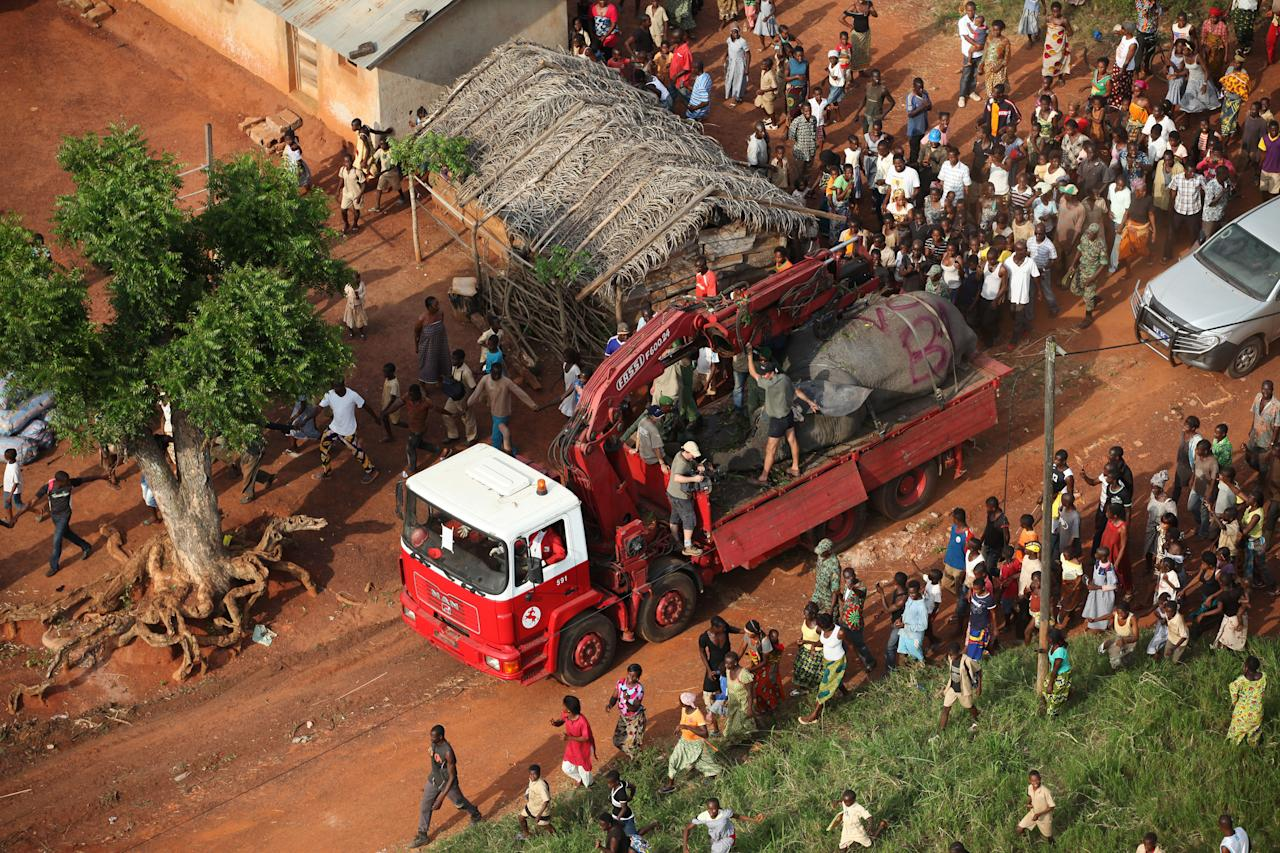 In this photo taken Monday, Jan. 20, 2014 and distributed by the International Fund for Animal Welfare, a tranquilized elephant is transported by truck through the town of Daloa, in western Ivory Coast. Conservationists are capturing and relocating elephants in Ivory Coast forced out of their traditional habitat by encroaching humans, in the first such operation attempted in Africa's forests. The International Fund for Animal Welfare this week began tranquilizing elephants outside the western town of Daloa, then locking them in a crate for the 10-hour drive to Assagny National Park on the southern coast. (AP Photo/IFAW)