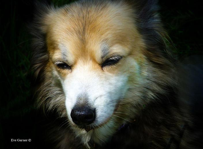 <p>This beautiful photo of Lilly was taken by six-year-old Eve last summer. </p>