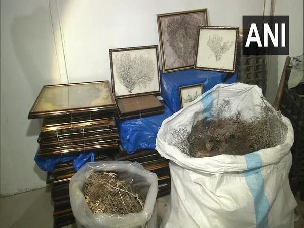 A visual from the godown where sea fans were seized in Vadodara. [Photo/ANI]