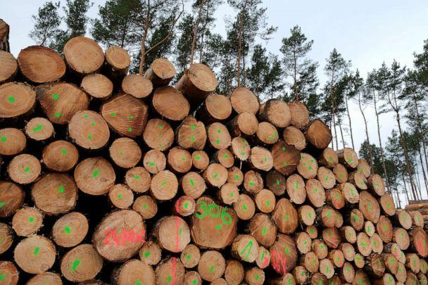PHOTO: Logs lie stacked on land cleared of trees at the site of the new Tesla Gigafactory, Feb. 17, 2020, near Gruenheide, Germany. (Sean Gallup/Getty Images, FILE)