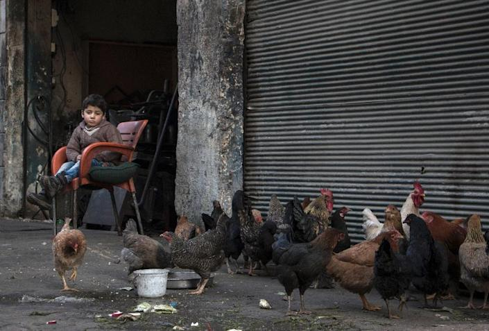 A Syrian child sits next to chickens being raised for eggs and meat in the northern embattled Syrian city of Aleppo on February 9, 2016 (AFP Photo/Karam Al-Masri)