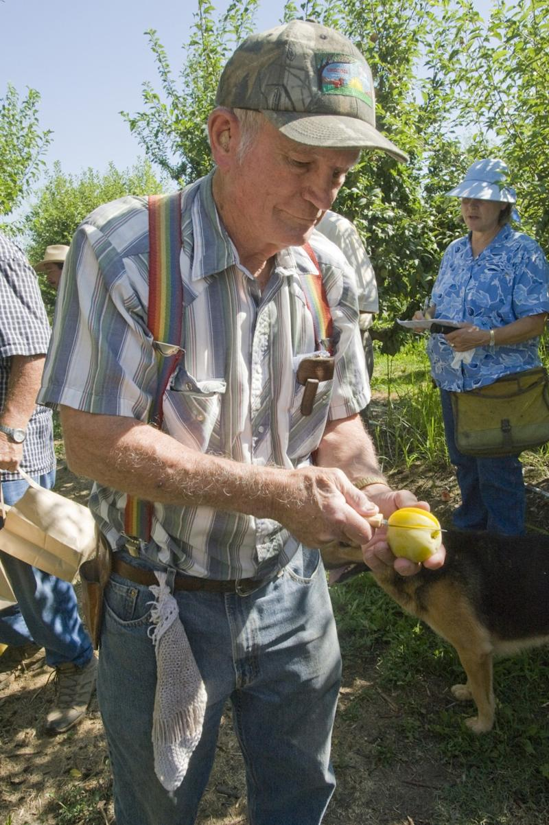 Floyd Zaiger offers a taste of a Pluot at his experimental orchard in Modesto.