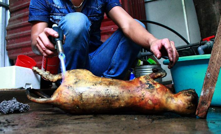 A cook uses a torch to burn the fur off a slaughtered cat at a restaurant in Hanoi on May 12, 2014 (AFP Photo/)