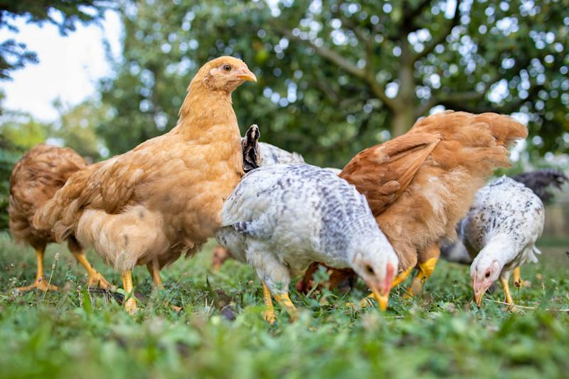 This year, the price of three French hens has stayed consistent with 2018 pricing at $181.50.