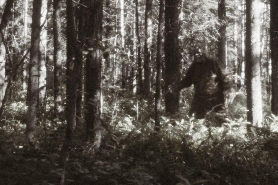 """<p>Bigfoot, Sasquatch, call it what you will, but many people are convinced the elusive creature exists. For years people have <a href=""""https://www.popularmechanics.com/adventure/outdoors/a23622082/bigfoot-history/"""" rel=""""nofollow noopener"""" target=""""_blank"""" data-ylk=""""slk:tried to track it down"""" class=""""link rapid-noclick-resp"""">tried to track it down</a>, resulting in videos and images often emerging of a tall, hairy animal walking upright. </p>"""