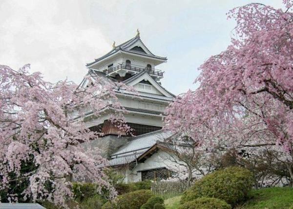 ▲ The three-tiered castle is a famous photo spot. It is a symbol of Kaminoyama City and many people visit it during the cherry blossom season (mid to late April).