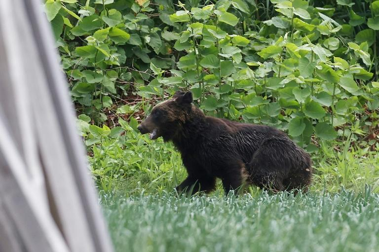 The brown bear injured four people including a soldier as it rampaged through the Japanese city of Sapporo