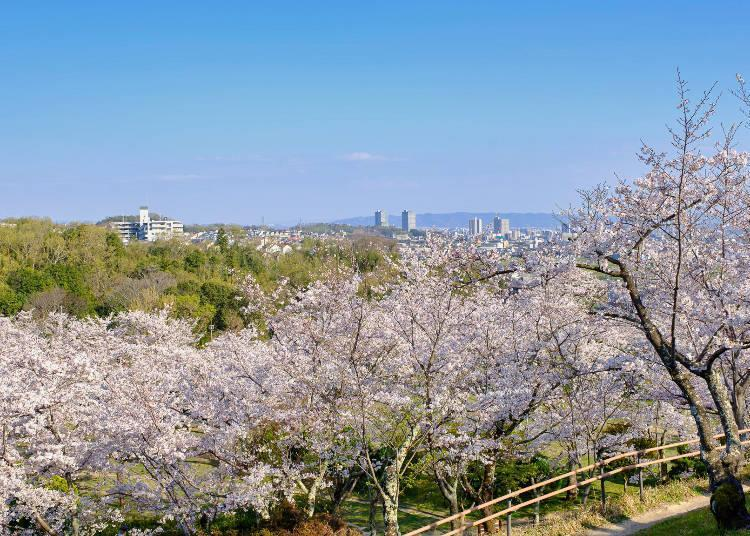 A great photo opportunity overlooking the cherry blossoms and the city below