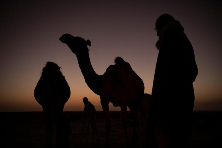 Today though, Dlimi also uses modern technology to help him raise and race his camels