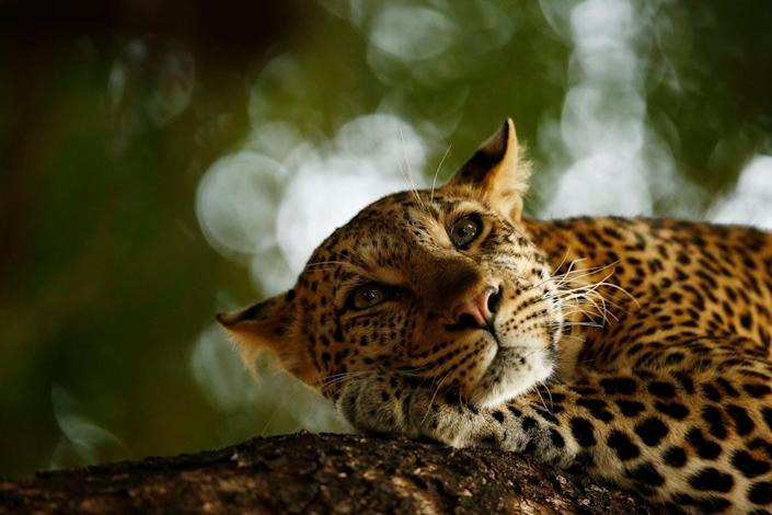 wildlife photographer young grand prize
