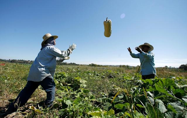 American farms rely heavily on immigrants to pick produce. REUTERS/Mike Blake/File Photo