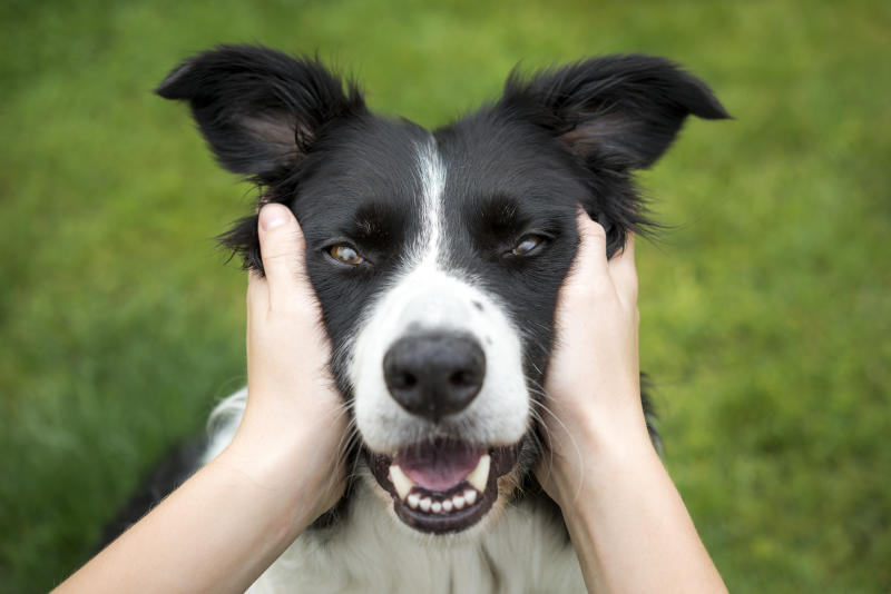A woman squeezes the cheeks of a happy Border Collie.