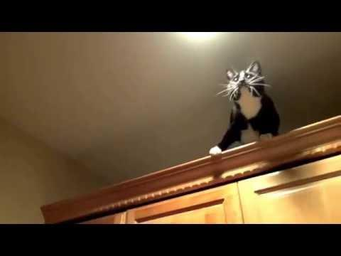 <p>You never know what type of creepy crawly Toby the ninja cat will go after next. He's chased spiders, ants and worms to name just a few. His mission in this video was to catch this pesky crane fly, and with persistence and determination, he got there in the end! Credit: YouTube/Pets, Animals, Travel, & More</p>