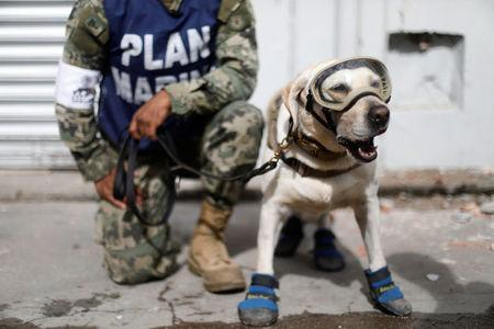 A member of the Mexican Navy stands next to a rescue dog after an earthquake struck on the southern coast of Mexico late on Thursday, in Juchitan, Mexico, September 10, 2017. REUTERS/Edgard Garrido