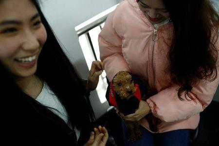 Girls play with a dog at live streaming talent agency Three Minute TV in Beijing, China, February 15, 2017. Picture taken February 15, 2017. REUTERS/Thomas Peter