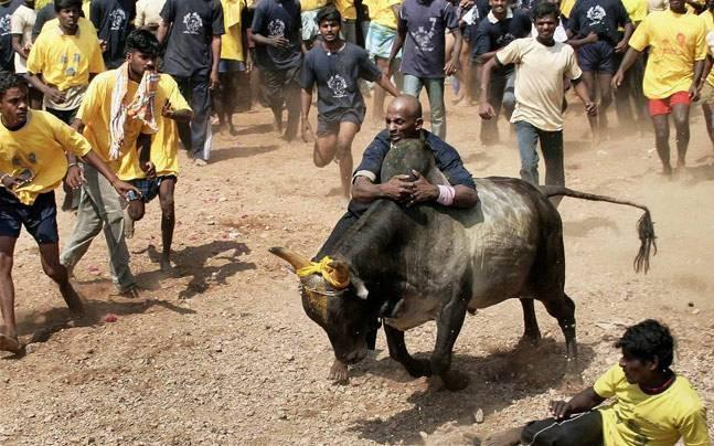 <p>Chennai is all set to get a Jallikattu Premier League. Yes, no need to rub your eyes - you're reading this right! Read on to learn more. </p>