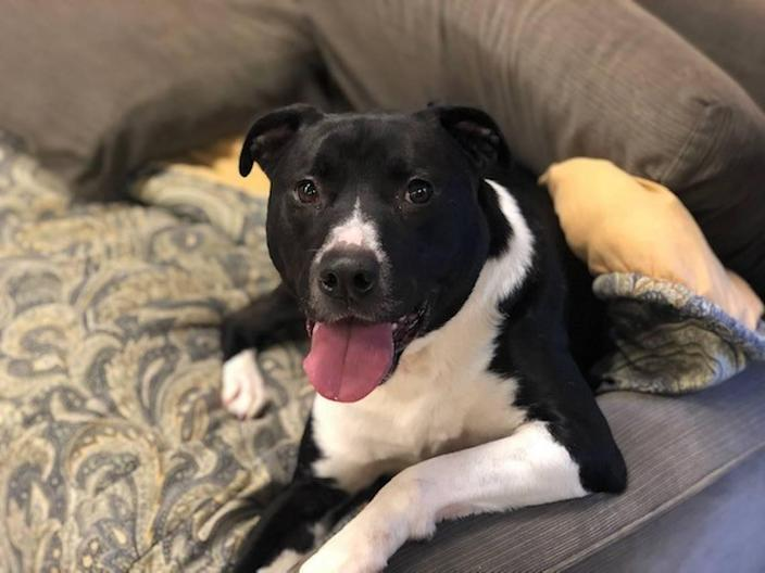 Your new best friend might be waiting for you at the CMPD Animal Control and Care SouthPark Mall Virtual Pet Adoptions event on March 6.